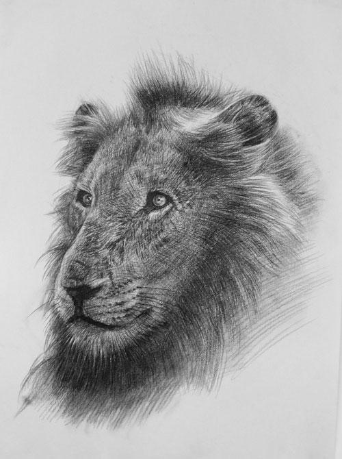 动物素描作品_合肥罗丹画室